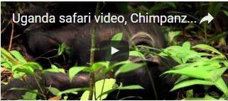 uganda-safari-video