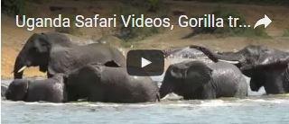 video-for-uganda-safari